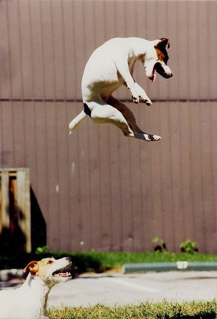 Jumpin' Jumpin' !