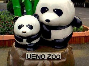 Le Zoo de Ueno à Tokyo   Vivre le Japon