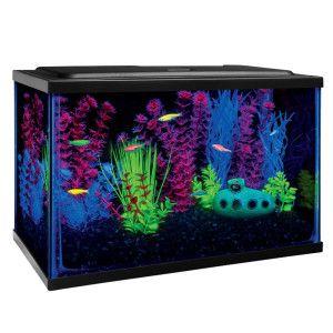 Glo fish starter kit at petsmart features blue for Petsmart fish aquariums