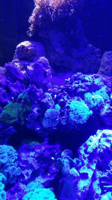 Aquarium in Newport