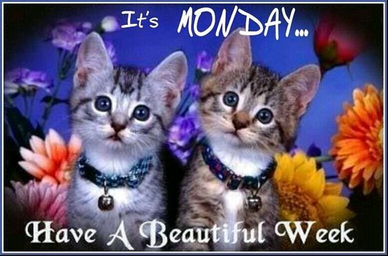 Happy Monday sister,hope you have a beautiful day,and the whole week.God bless you and yours,enjoy and take care !!!   xxx
