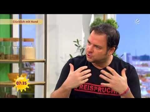 Martin Rutter Im Sat1 Fruhstucksfernsehen 19 01 2018 Youtube Fruhstucksfernsehen Hundchen Training Und Hundeschule