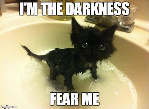 Funny Cats Memes Catsandkittens Lustige Tiermemes Lustige