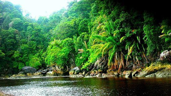 Amazon Rainforest Jungle Black River Wallpaper Hd Resolution 1920 1080 1080p Wallpaper Hdwallpaper Deskto Jungle Wallpaper Forest Wallpaper Forest Pictures