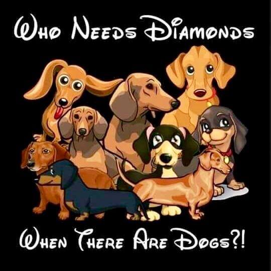 Pin By Roseanne On Animals Dachshund Love Dachshund Dog Dapple