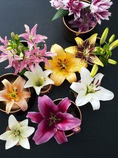 Que révèle votre fleur préférée sur vous ? Découvrez la signification de votre préférence