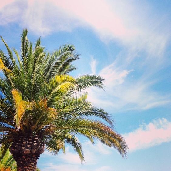 Oh, Summer... #palm #palme #summer #sommer #summerfeeling #happy #sunshine #beach #france #cotdazure
