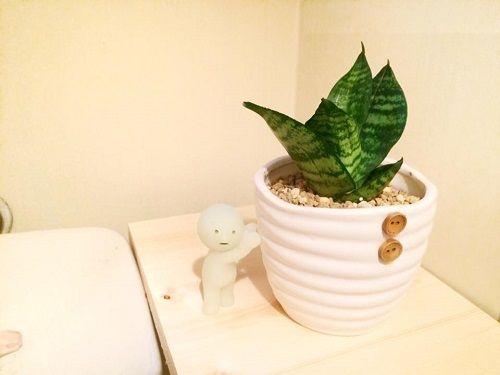 トイレにもグリーンを置きたい 8つのオススメ観葉植物 観葉植物