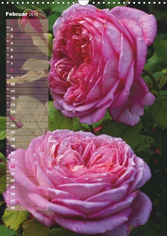 Monatskalender: Rosen für DICH #flower #rose