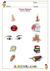 math worksheet : human body parts worksheets for children  kindergarten  : Human Body Worksheets For Kindergarten