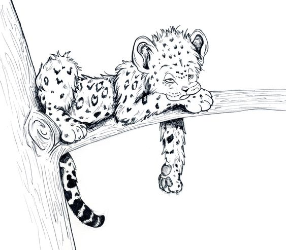 baby animal sketches   Cute Baby Animal Drawings   Nursery ideas ...