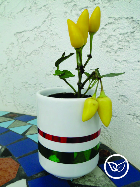 Pepper plant favor! So cute! Ideal as party gift or decoration <3