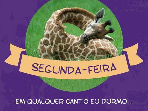 Acabo dormindo no metrô, no ônibus, na mesa, em qualquer canto...  #segunda #sono #girafa #animais