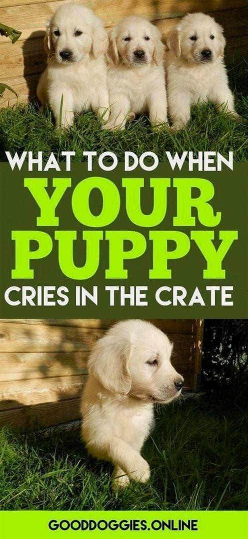 Dog Training Hattiesburg Ms Dog Training Shock Training Dog