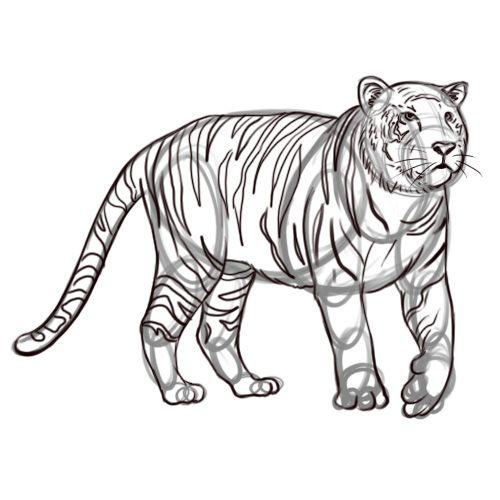 Comment dessiner un tigre tigres comment dessiner et - Apprendre a dessiner un tigre ...