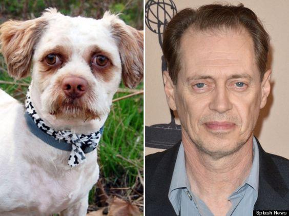 20 Celebrities Who Look Like Their Pets - bestlifeonline.com