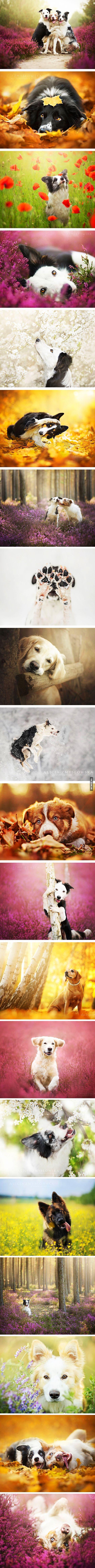 20 photographies de chiens qui réchauffent le cœur ! – Québec Meme +