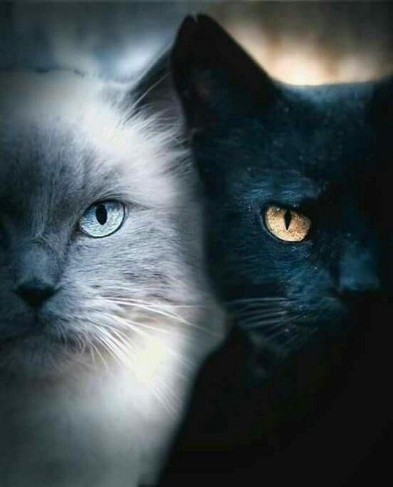AStuce soigner sont chat naturelle 7d15106914d5392c7b71dd6f3dda599f