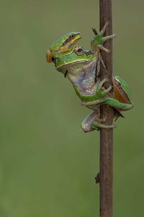 ~~Generations | little frog hitching a ride by Santiago M. C.~~