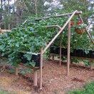 how to make Metal Garden Tags | Building A Grape Arbor In Your Garden: How To Build A Grape Trellis