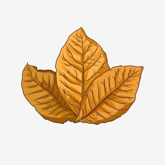 Folha De Tabaco Folha Clipart Download Gratis De Folhas De Tabaco Preto Imagem Png E Psd Para Download Gratuito Leaf Illustration Leaf Clipart Tobacco Leaf