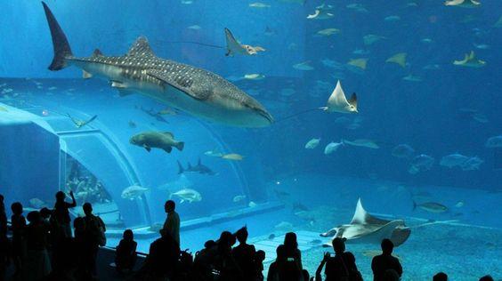 Cómo mantener en perfectas condiciones el acuario - http://www.depeces.com/mantener-perfectas-condiciones-acuario.html