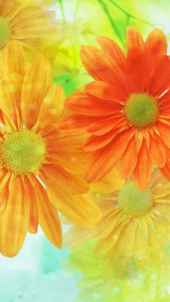 Orange & Yellow Spring Flowers iPhone Wallpaper | Color ...