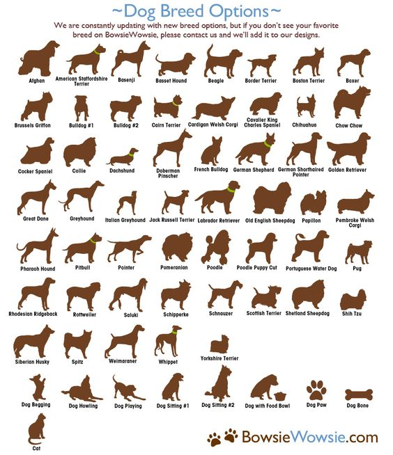 Dog Breed Names With X