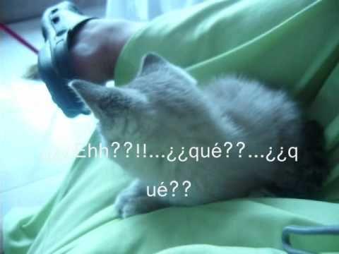 La herencia de Tomás, un vídeo de cuando mi gatito era un bebé.