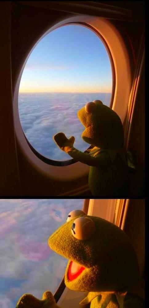 Pelosi Memes Funny Cute Memes Funny Memes Green Aesthetic Tumblr