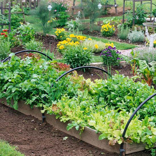 Cresça uma horta em camas levantadas