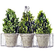 Buy Winterflora Tall Topiary Tree Pot Plants, Green Online at johnlewis.com