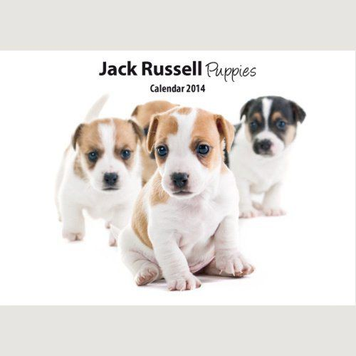 Jack Russell Puppies Wall Calendar - http://www.thepuppy.org/jack-russell-puppies-wall-calendar/