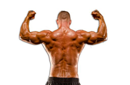 Image result for How Should You Build Up Your Muscle Using Steroidal Drugs?
