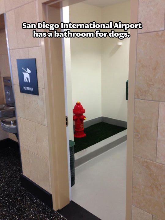 A bathroom for dogs…  So, is this assuming that the dog flew on the plane next to their human. ????  At any rate, it's cool.