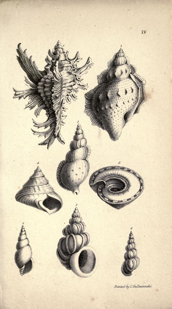 Lessons on shells, - Biodiversity Heritage Library