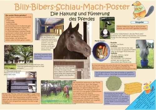 Pferdeposter Billy-Bibers-Schlau-Mach-Poster   Die Fütterung und Haltung des Pferdes