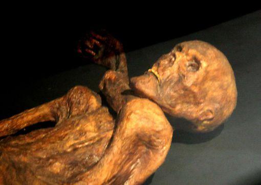 reconstitution de la momie de Ötzi présentée au musée de Préhistoire de Quinson…