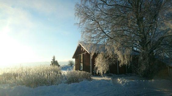 Vintern