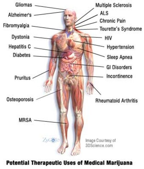 body parts texts and the o 39 jays on pinterest : body parts diagram - findchart.co