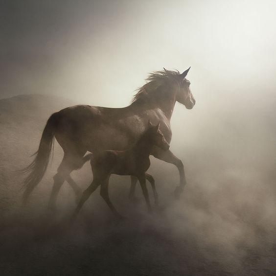 horse by mehmet ilhan