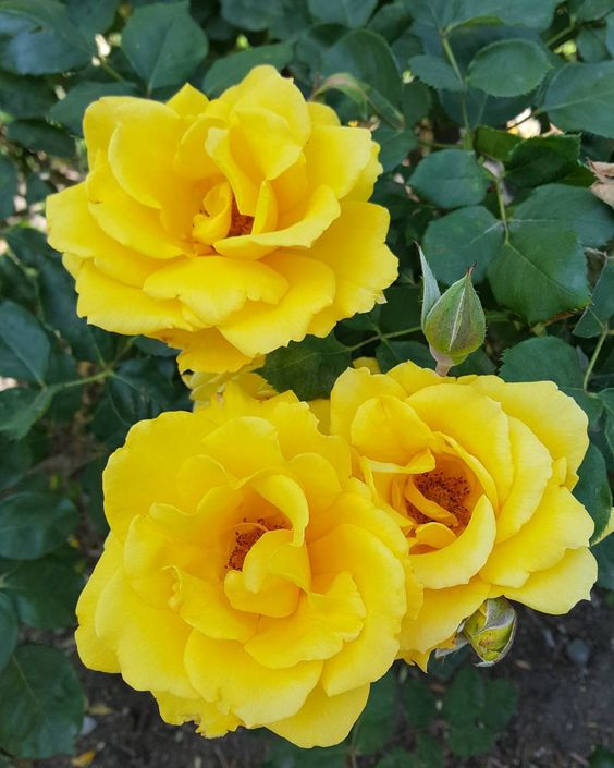 #perspective #Godisgood #JesusisLord #blessed #love #joy #peace #hope #art #photography #fambam #adventure #yellow #roses #support #our #troops #little #things #where #heart #is #eyeswideopen #everythingisbeautiful #Holyspirit #shine by perspective_by_ams