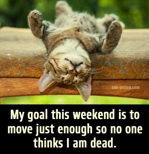 Funny quote with cats. My goal this weekend is to move just enough so no one thinks I am dead.: