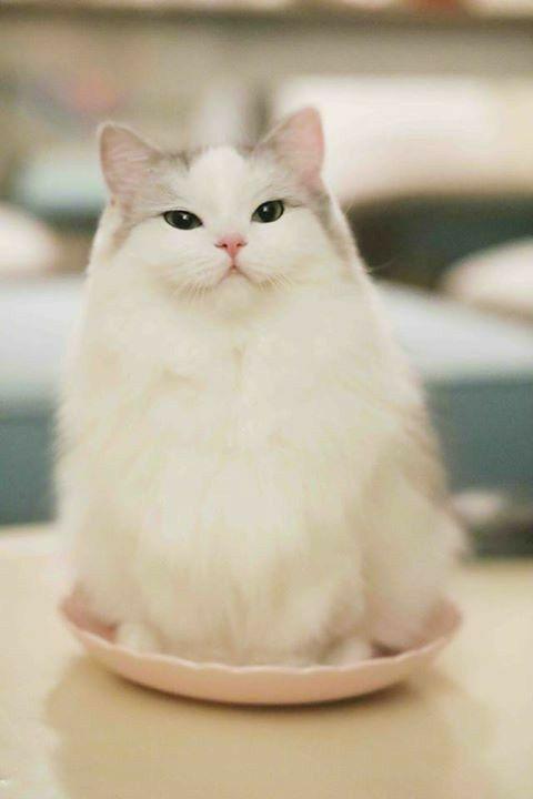 Pin By S A F U R A On Cute Kittens Cute Cats Pretty Cats Cute Cat Gif