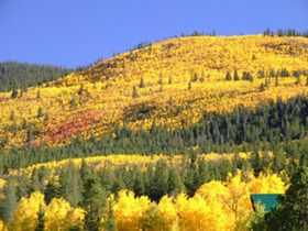 Colorado Gold: Fall Foliage in The Centennial State - Better than New England? Well, different anyway. The Aspen's change from green to gold in the fall is positively breathtaking.