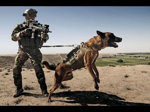 Fun Activities For German Shepherds Military Working Dogs