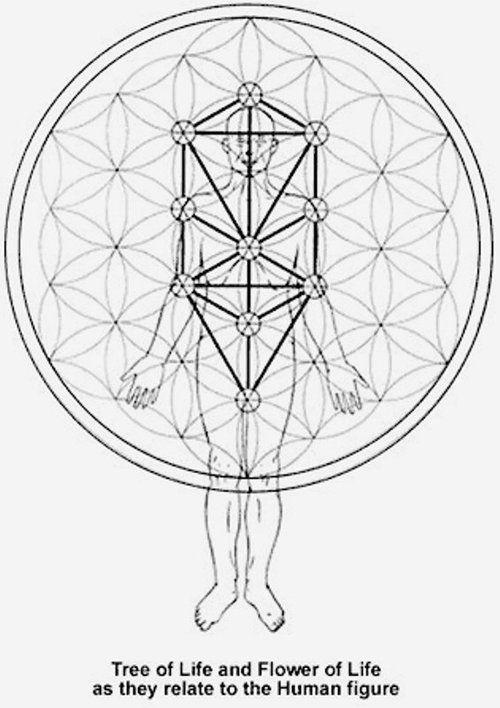 los chakras y el arbol de la vida                                                                                                                                                      Más: