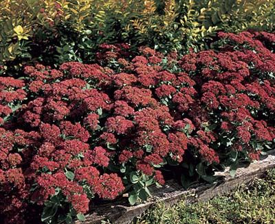 Pinterest the world s catalog of ideas for Low maintenance perennials zone 4