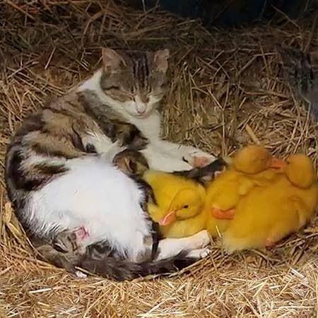 Kitty & family