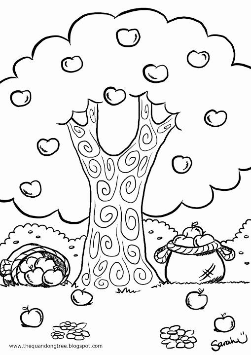 Apple Tree Coloring Page Best Of The Quandong Tree Colouring Pages In 2020 Tree Coloring Page Christmas Tree Coloring Page Coloring Pages